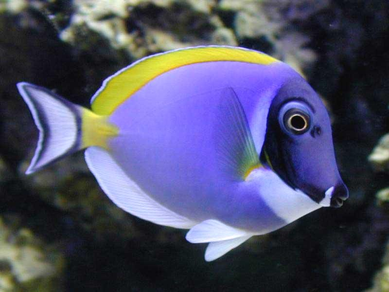 Saltwater aquarium fish photos - Marine tropicals - Pinellas Aquariums
