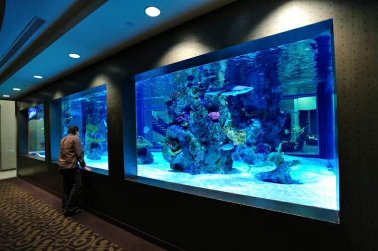 Acrylic aquariums aquatic exhibits commercial and for Shark fish tank