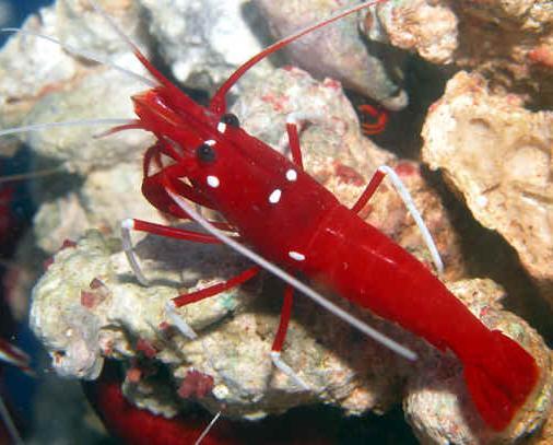 Saltwater Aquarium Fish Photos Marine Tropicals