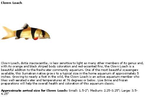 Freshwater Speciestop 50 Freshwater Tropical Fish Descriptions