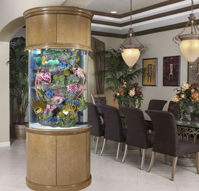 Aquanotes aquarium and pond information pinellas - Decoraciones de peceras ...