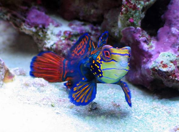 saltwater aquarium fish for sale exotic saltwater fish
