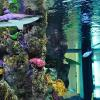 Pinellas Aquariums and Titan Aquatic Exhibits can supply you with any aquarium system including the VERY large!